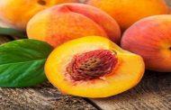 आड़ू, पल्म एवं खुवानी फल उत्पादन में देश में प्रथम स्थान पर