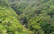 वनों पर खतरा बनता उत्तराखंड सरकार का अदूरदर्शी फ़रमान