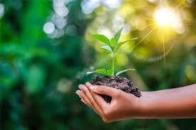 कोरोना, जैव विविधता और पर्यावरण..