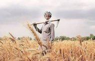 छोटे किसान सांसत में जान..
