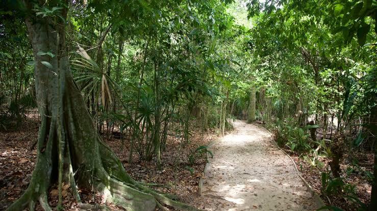 पर्यावरण दिवस-5 जून पर विशेष : 'लुहां- दिगोली' गांव की मात्रृशक्ति से सीखना चाहिए पर्यावरण बचाना
